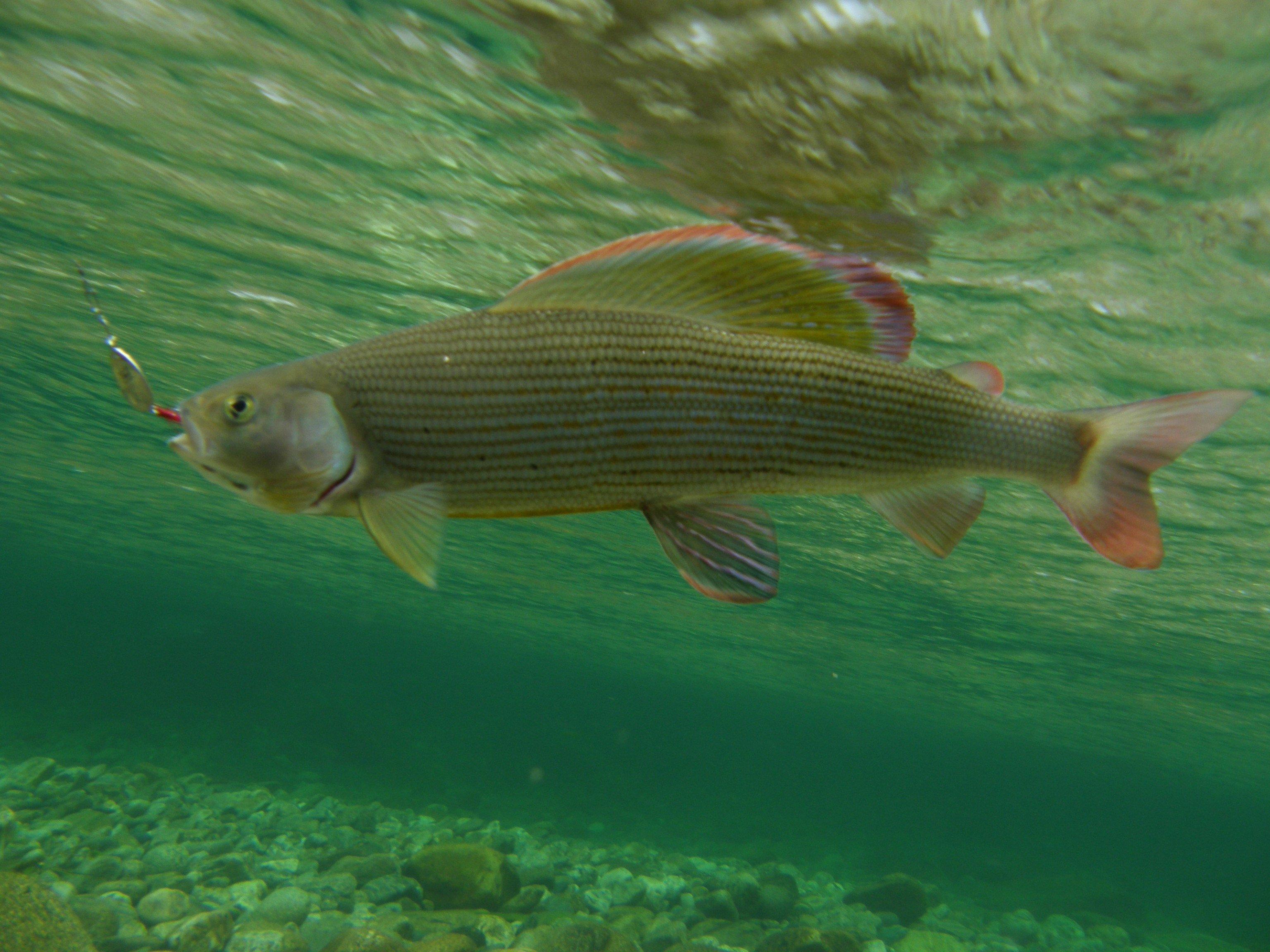 Потрясающая рыбалка на хариуса
